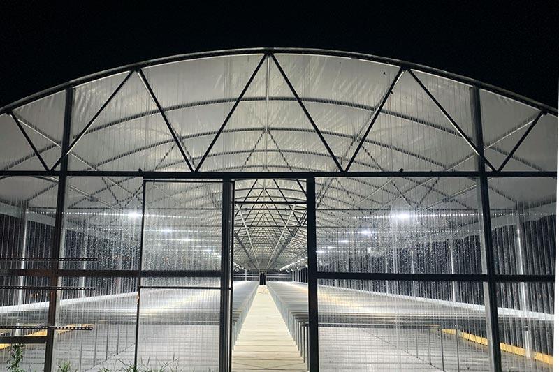 outdoor custom greenhouse for hemp/cannabis plants