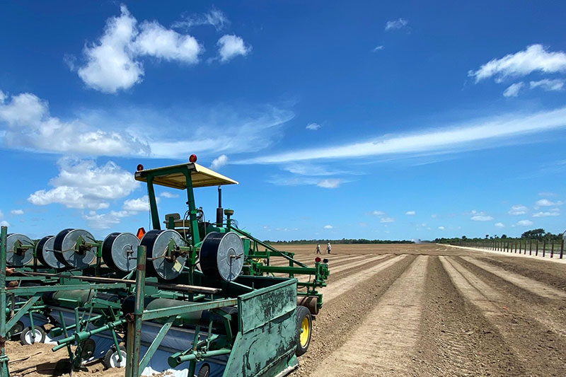 south tip's hemp cannabis field in south Florida's summer sun